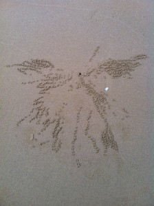 Meanwhile tiny crabs create Rorshach tests out on the mud flats. An angel? a Pegasus? a moose's head?